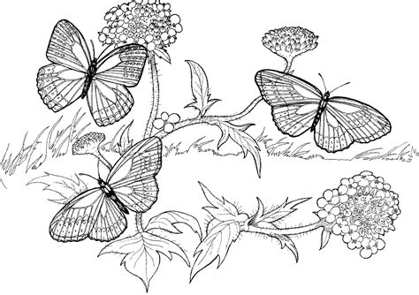 very hard coloring pages of flowers hard animal coloring pages coloring home