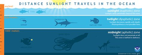 Plants That Do Not Need Much Sunlight by How Far Does Light Travel In The Ocean
