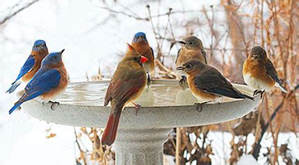 winter water for birds