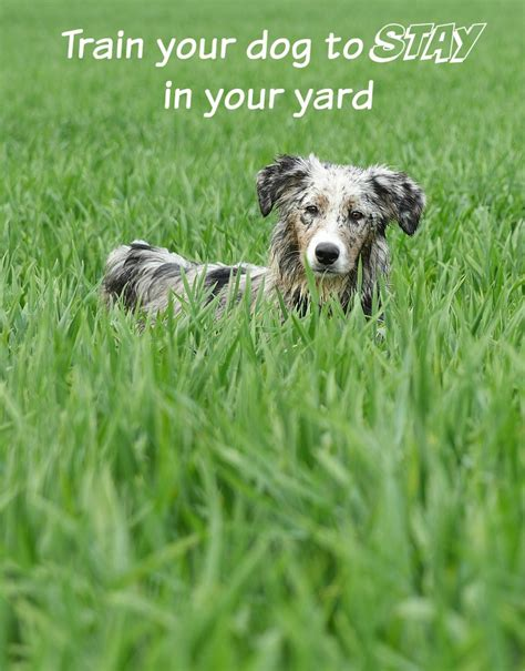 how to a to stay in your yard tips your to stay in the yard