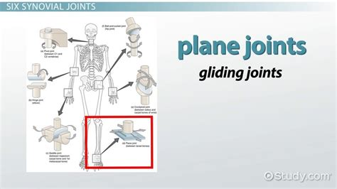 pattern quantification exception definition diagram of body joints image collections how to guide