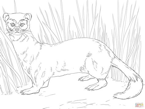 ferret coloring pages to print coloring pages