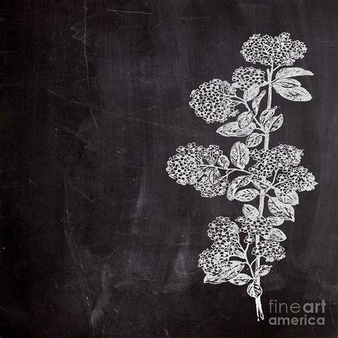 Floral Print Duvet Cover Elegant Nature Plants Flowers Chalkboard Art Drawing By