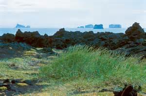 on surtsey iceland s upstart island scientists in the field series books surtsey wormchurn