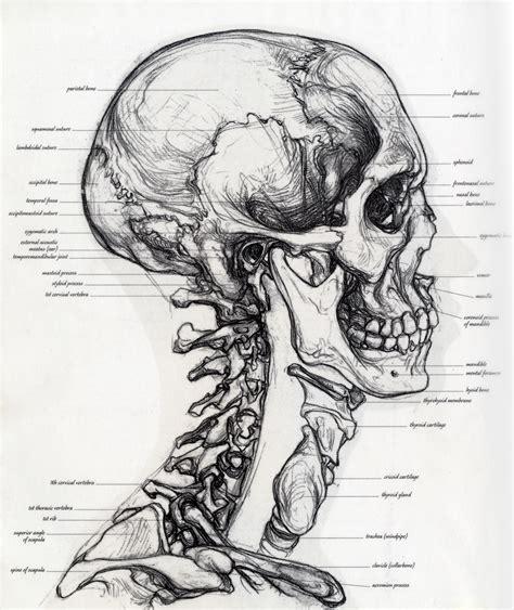 Drawing Human Anatomy by Simblet Drtenge