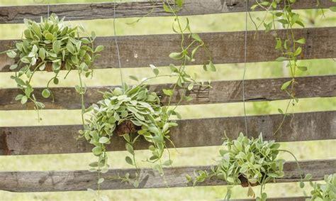 imagenes de jardines verticales caseros jard 237 n vertical con un pal 233 bricoman 237 a