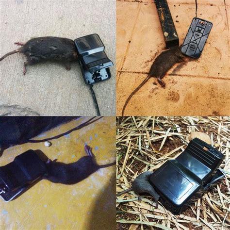 Dijamin Perangkap Tikus Joni Cat perangkap tikus joni cat elevenia