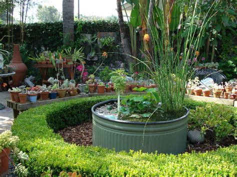 water gardening in containers reader photos succulents and water gardens in california