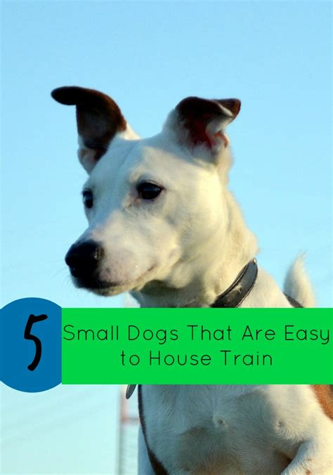 easiest dogs to house train 5 small dogs that are easy to house train dogvills