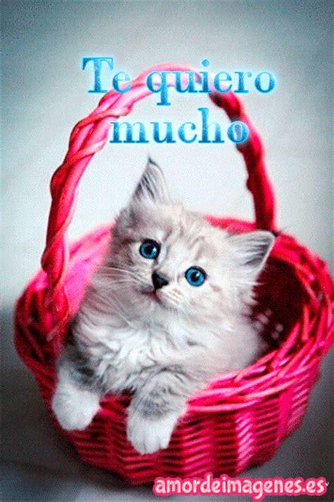 imagenes con movimiento de amor para dedicar im 225 genes de gatos con movimiento con frases de amor para