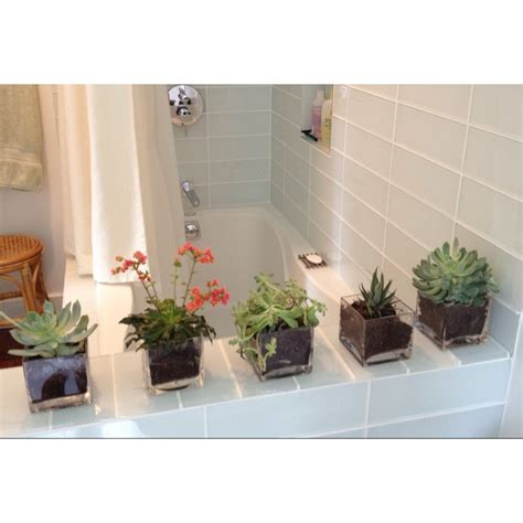 succulents in bathroom succulents in bathroom project 330 pinterest