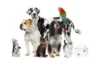 Pet Sitters Pet Sitting Is A Respectable Profession