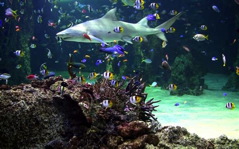 Find Where Live For Free Live Aquarium Screensaver Search Engine At Search