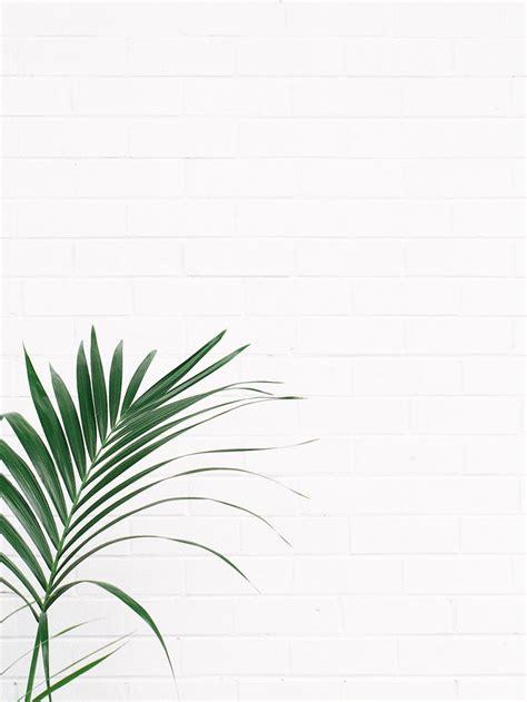 minimalist plants green the fifth watches minimal meets classic design
