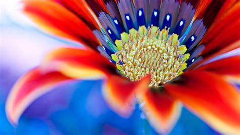 sfondi fiore sfondo quot fiore coloratissimo quot 1920 x 1080 natura fiori