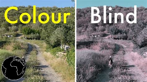 do blind in color how color blindness works