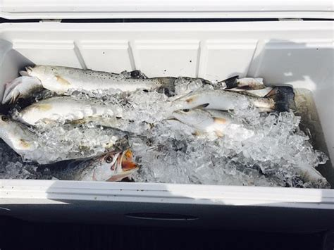 charter boat gulfport ms alex smith fishing charter gulfport ms address phone