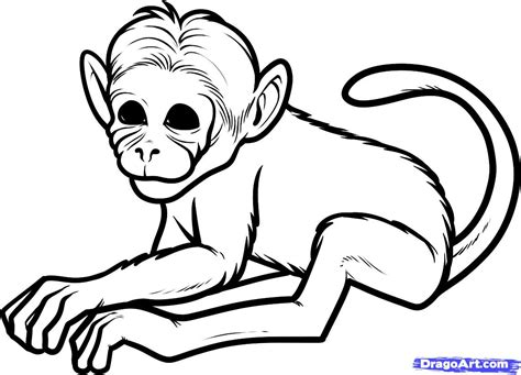 easy monkey coloring pages how to draw a chimeric monkey chimeric monkeys step by