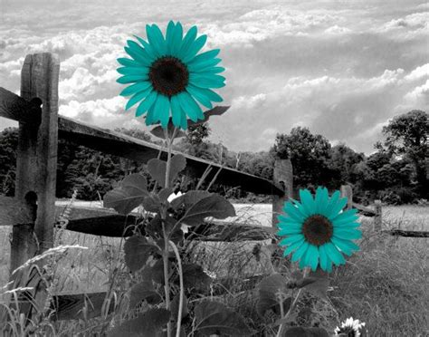 teal and white l shade black white teal sunflower landscape wall art by
