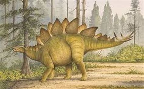 Feet In A Meter by 10 Interesting Stegosaurus Facts My Interesting Facts