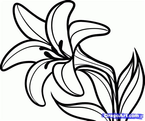 Outline Sketches Of Flowers by Flower Outline Coloring Home