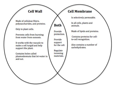carbohydrates on cell membranes help cells what is the difference between the cell wall and the cell