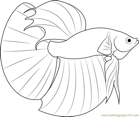 Betta Fish Coloring Pages betta fish coloring page free other fish coloring pages