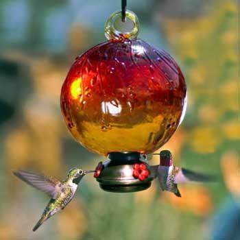 17 best images about save the hummingbirds on pinterest
