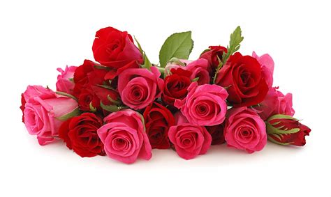 foto bellissime di fiori immagini di fiori 47 foto sfondi hd bonkaday
