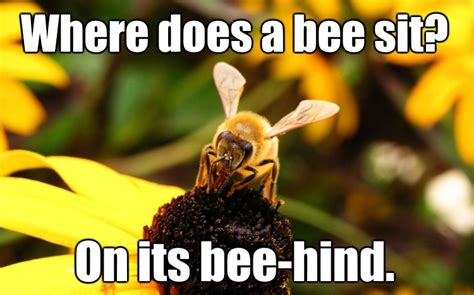 Bee Meme - bee meme pictures to pin on pinterest thepinsta