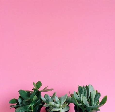 aesthetic plant wallpaper untitled image 3840898 by winterkiss on favim com