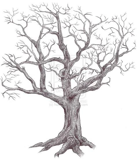 b tree drawing tool tree