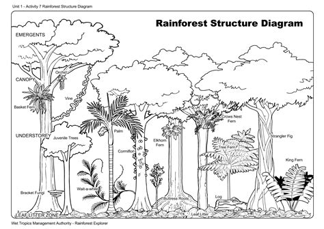 draw forest plants bing images rainforest