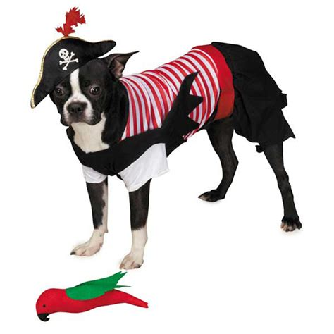 pirate costume for dogs pirate tails costume baxterboo