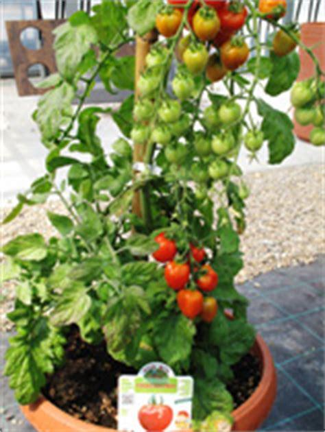 ortaggi in vaso azienda agricola ortomio produzione piante da orto
