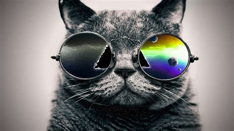 iphone wallpaper cat glasses cool cat with glass wallpapers hd download hd cool cat