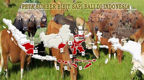 Bibit Sapi Di Makassar sumber bibit sapi bali di indonesia