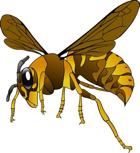 hornet clipart brown yellow hornet clip at clker vector clip