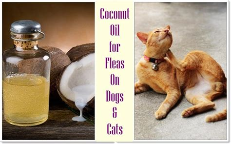 coconut for fleas on dogs 15 home remedies to get rid of fleas on dogs cats in house