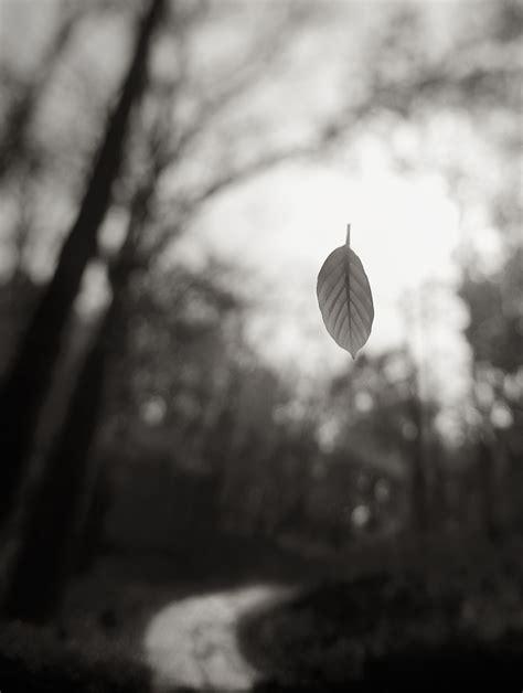Artistic Photography by Artistic Photography