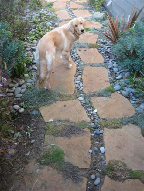 backyard pet the 34 best images about pet friendly landscaping design