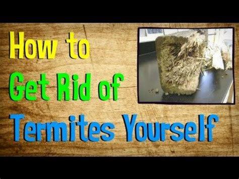 6 diy termite treatments termites diy and