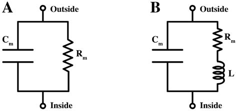 biological electrical resistor membranes free text the effect of the nonlinearity of the response of lipid membranes
