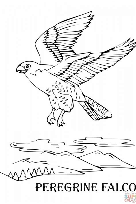 hawk coloring pages hawk falcon coloring pages for preschool and