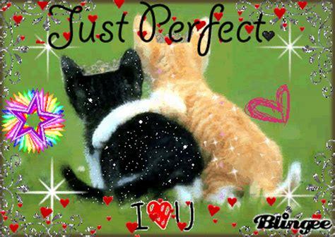 imagen tierna de amor gif imagen tierna de gatitos con frase de amor memes