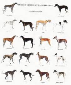 great dane color chart the tallest is a german mastiff by the name of zeus