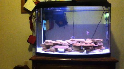 Aquascape Malaysia How To Aquascape A African Cichlid Fish Tank Doovi