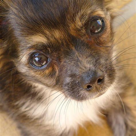 encephalitis dogs encephalitis brain inflammation in dogs canna pet