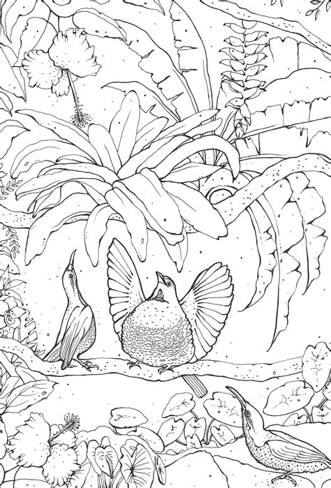 coloring pages bird of paradise kerry lemon birds of paradise colouring book