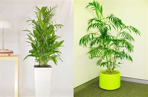 indoor plants indirect sunlight 10 indoor plants which gives you fresh air interior